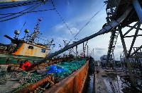 """一船""""捞""""进30多万,吕四渔港这一汛很""""多金""""!"""